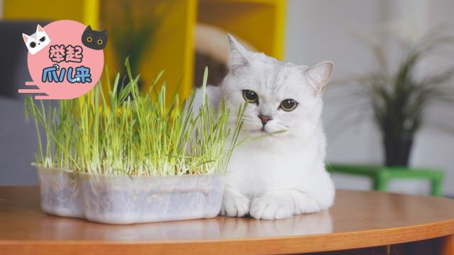 喵星人的猫草盛宴!