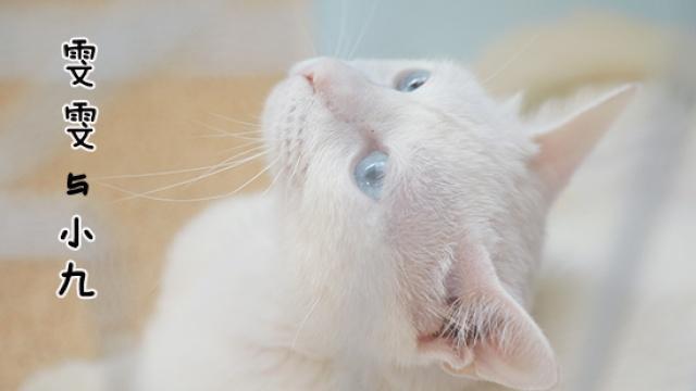 患艾滋的流浪猫,如何走回生的边缘