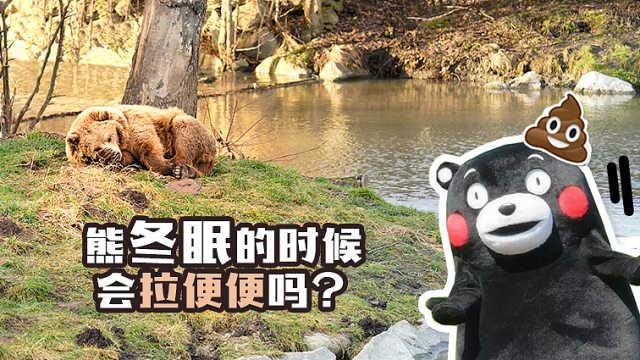 熊冬眠的时候会拉便便吗?