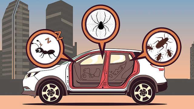 """车里有座""""疯狂动物城""""该怎么办?"""