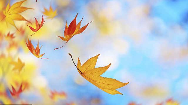 为什么北方秋天会落叶,而南方不落