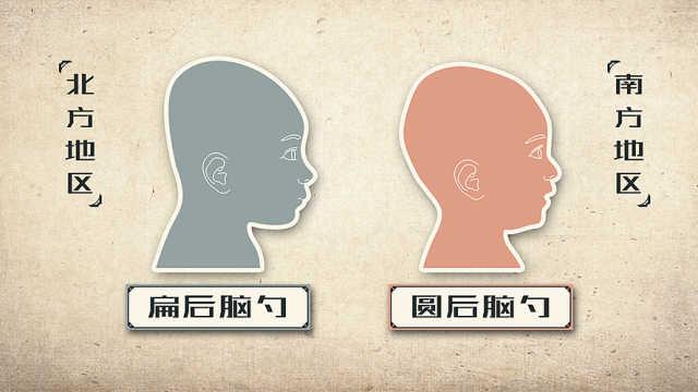 为什么南方人头圆,北方人头扁?