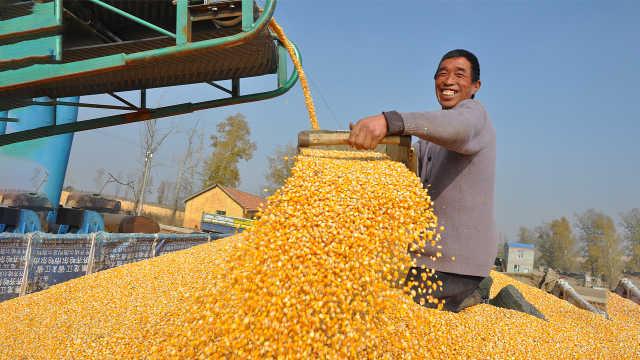中国粮食自给自足,为啥还要进口?