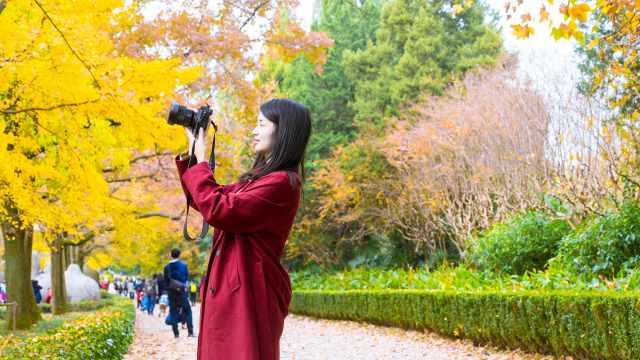 南京明孝陵,拥抱一个彩色的秋天