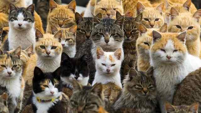 日本一座岛被猫占了,猫数量比人多