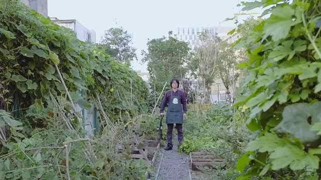 他在高档小区间的城市缝隙建菜园子
