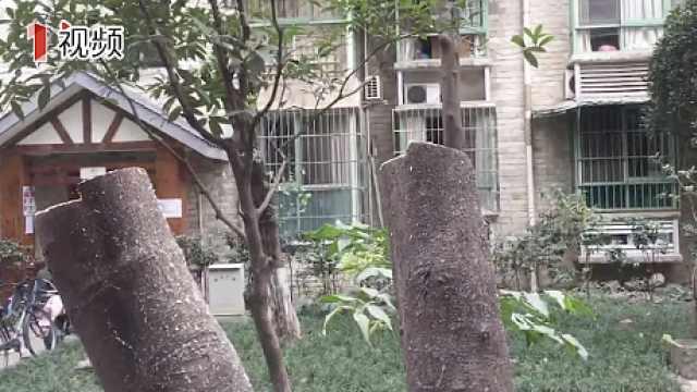 修枝变砍树?城管部门:过度修剪