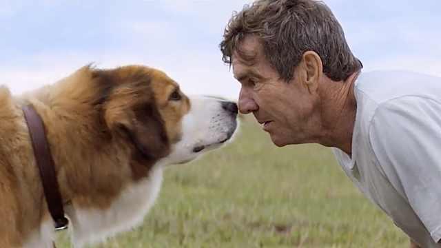 《一只狗的使命》,看百次都不会腻