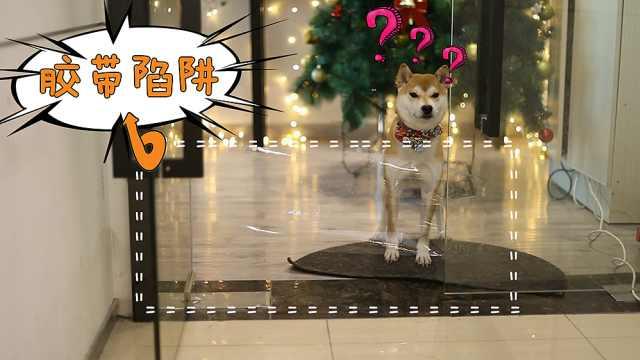 """狗狗突然遇到""""空气墙""""会怎么做?"""