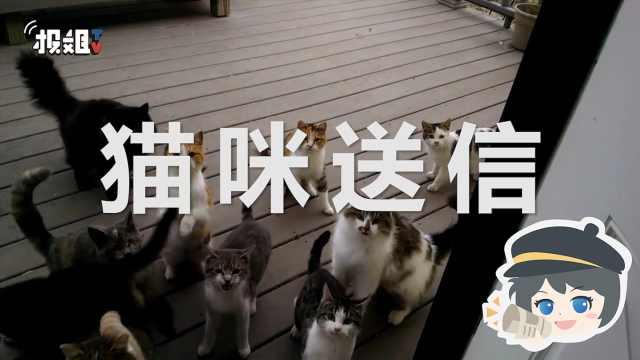 让猫大爷去送信?你想好怎么死了吗