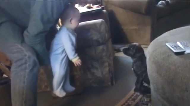 宝宝一见狗狗就发笑,这笑声太魔性