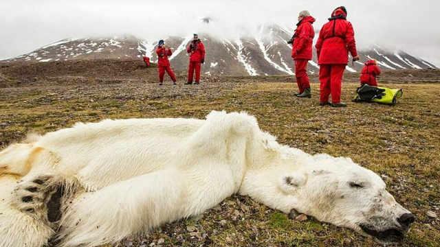 给即将饿死的北极熊投食是犯法的?