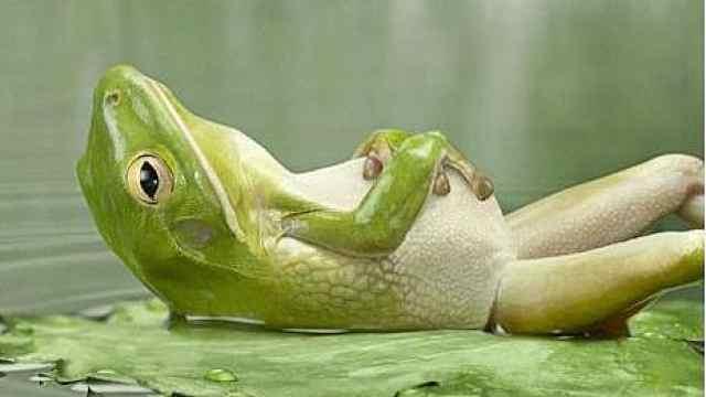 扎心!旅行青蛙可能根本不爱旅行