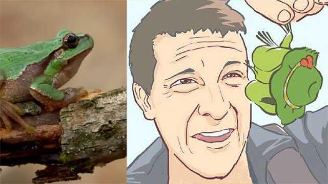 养了这么多天的蛙儿子是个什么蛙?