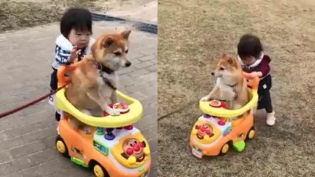 萌娃带狗狗出门,狗狗坐着她来推