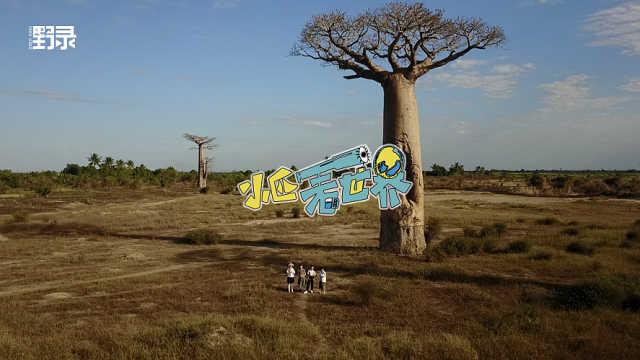 在非洲遇见一棵自强不息的树