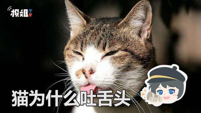 你知道猫为什么会吐舌头吗?