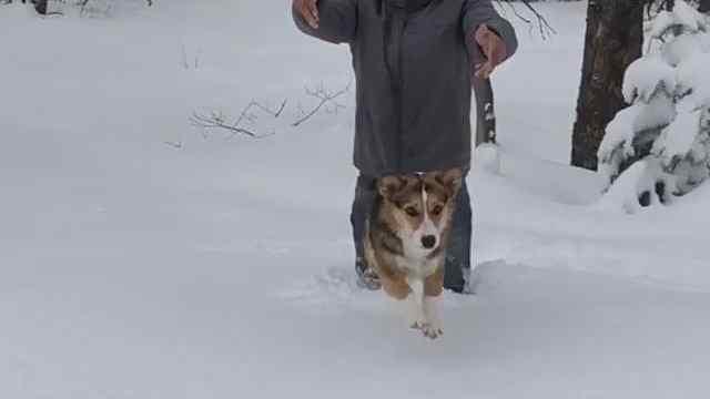 新型降雪量测量仪:柯基