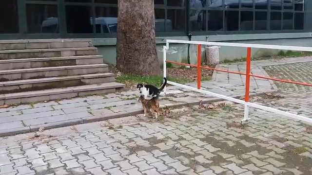 公猫:冷静,请克制一下!