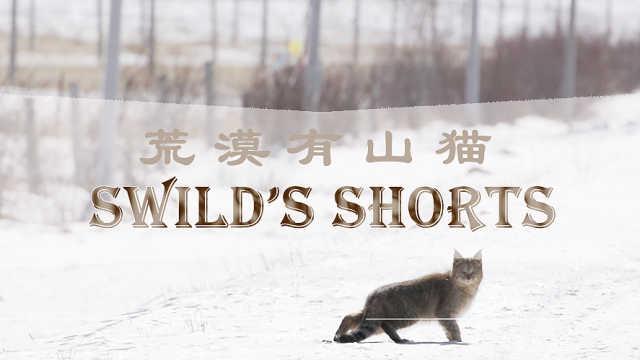 【秒拍大自然·19期】荒漠有山猫