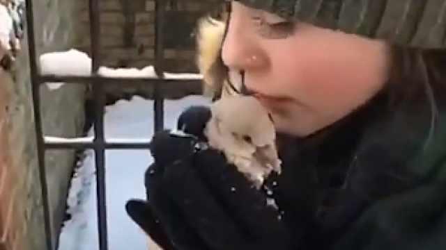 鸽子被困雪地冻僵,情侣全力救助