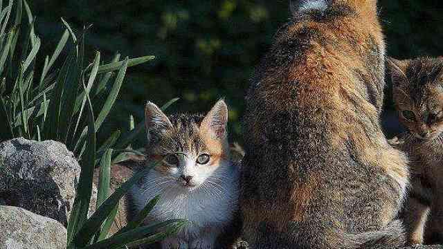 日本海啸后:人们与猫相依为命