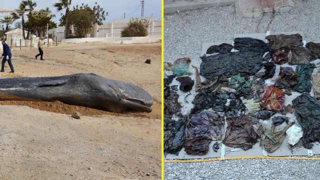 海滩惊现抹香鲸尸体,胃中60斤垃圾