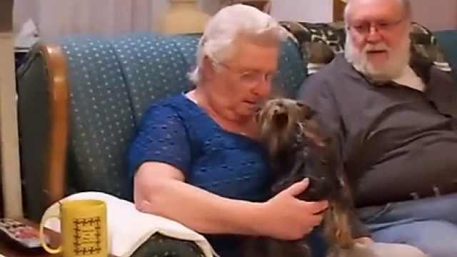 收到一只小狗,严肃奶奶忍不住哭了