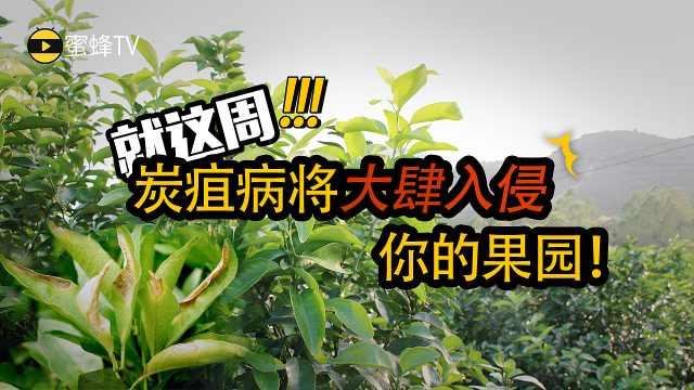 别让炭疽病入侵你的果园