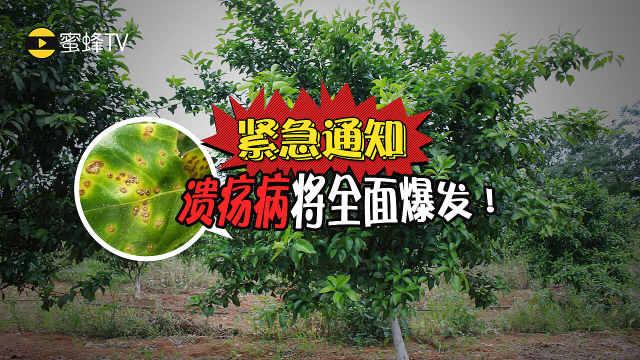 如何防治柑橘溃疡病