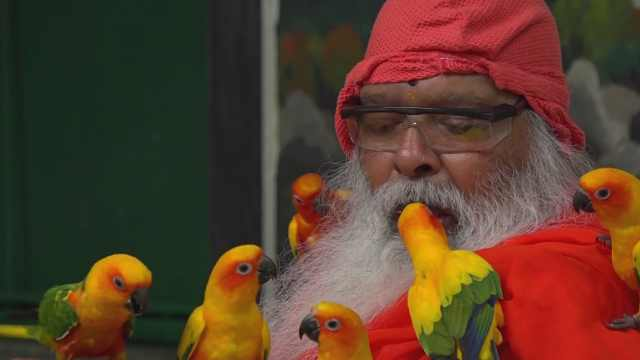 印度动物专家亲自用嘴给鹦鹉喂食!