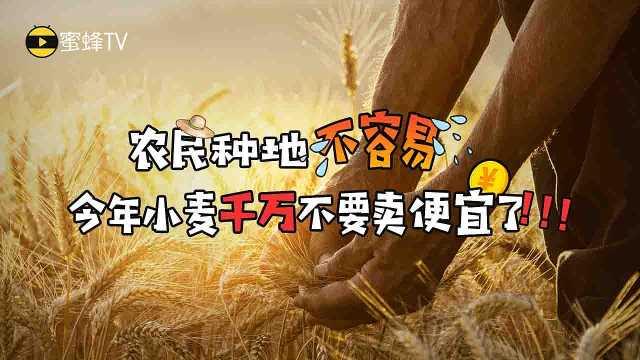今年小麦别卖便宜了