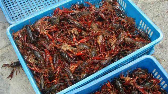 小龙虾卖那么贵养殖成本大约多少?