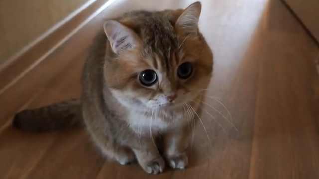 萌爆!会跳舞的猫咪耳朵实力抢镜