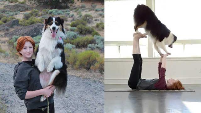 一条会做瑜伽的狗,简直要成精了