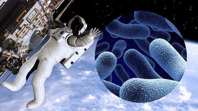 国际太空站外壳发现海洋浮游生物
