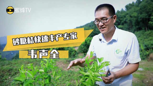 韦声全:让农民用低成本种出好柑橘