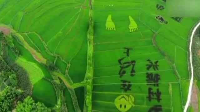 """村民稻田里作""""水稻画"""",吸引游客"""