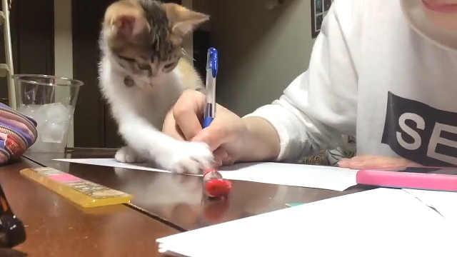 这作业我是没法做了!