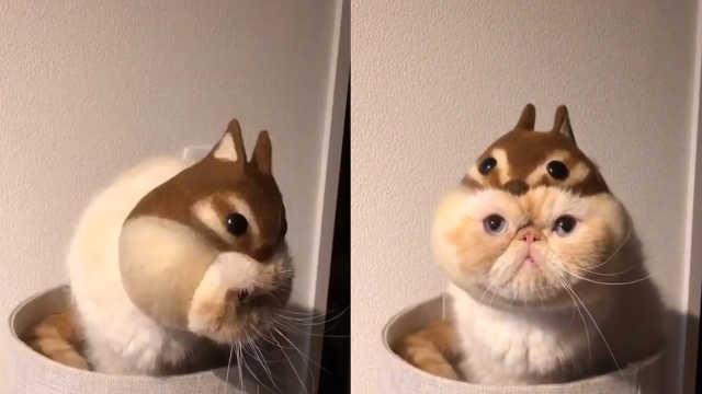 松鼠还是猫咪?看我小拳拳就知道啦