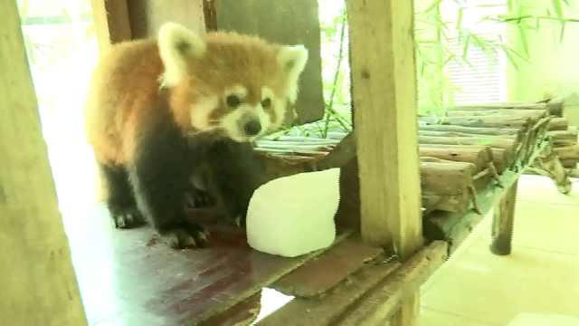 动物避暑三宝:冰块西瓜藿香正气丸