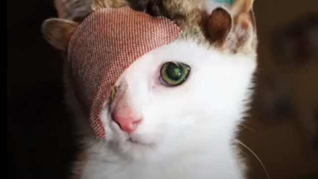 四耳独眼小猫,成主人心中白月光