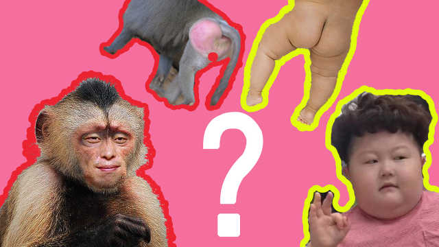 猴子的脸为什么比我们人类的脸皱?