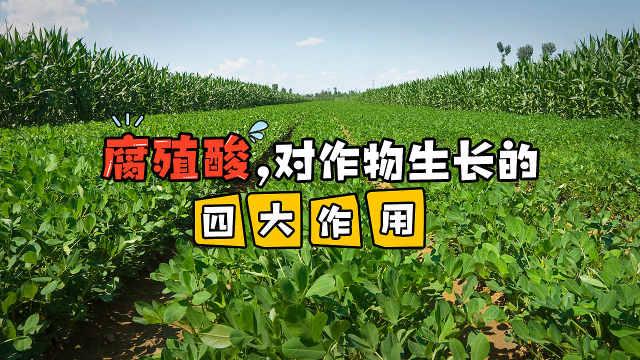 腐殖酸,对作物生长的四大作用