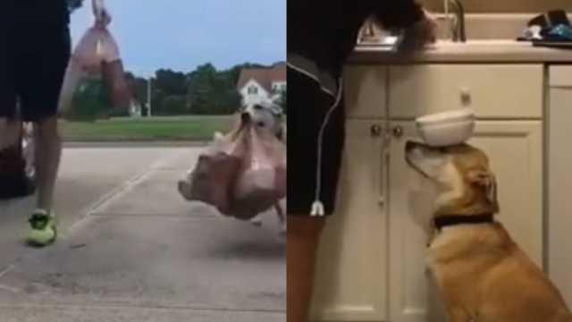 史上最有用狗狗助手:拎东西还洗碗