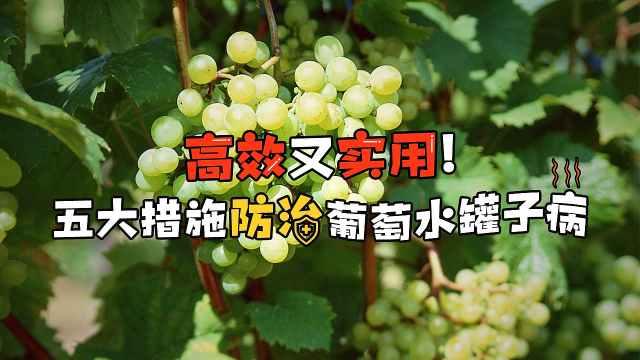 葡萄水罐子病防治五大措施