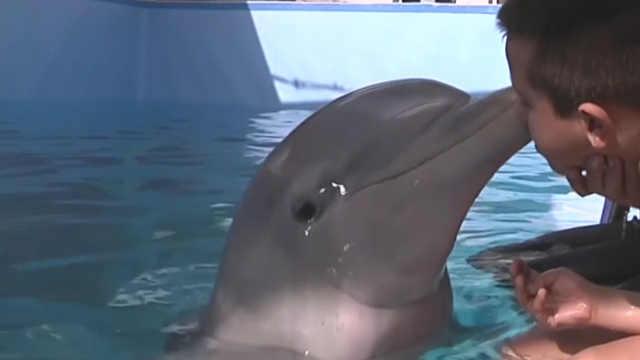 海豚拯救计划,天使微笑我们守护