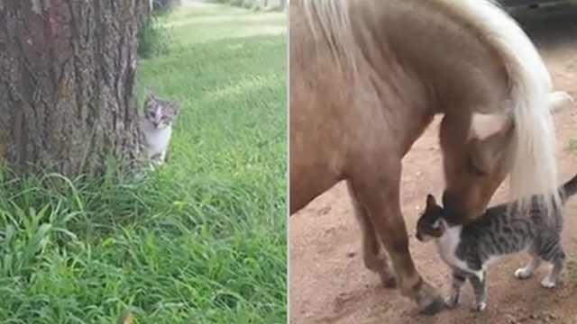来自猫猫的好奇心,差点把自己吓死
