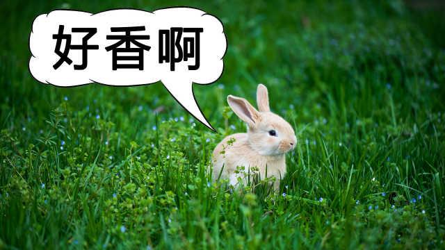 """青草发出的清香味是""""求救""""信号?"""