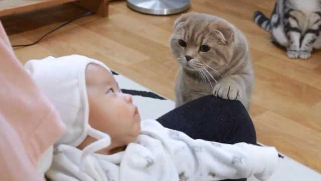 为什么猫咪对婴儿更有耐心?